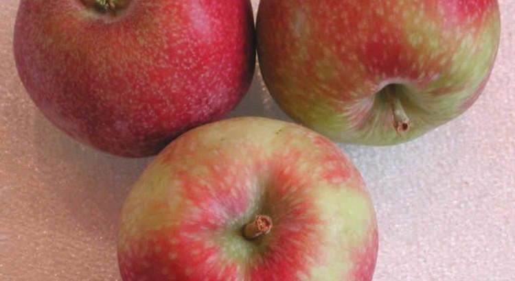 јабуке